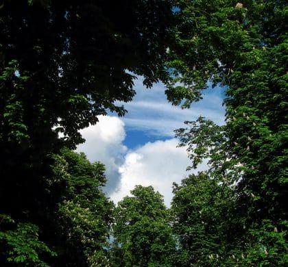 Bäume pflanzen gegen den Klimawandel!