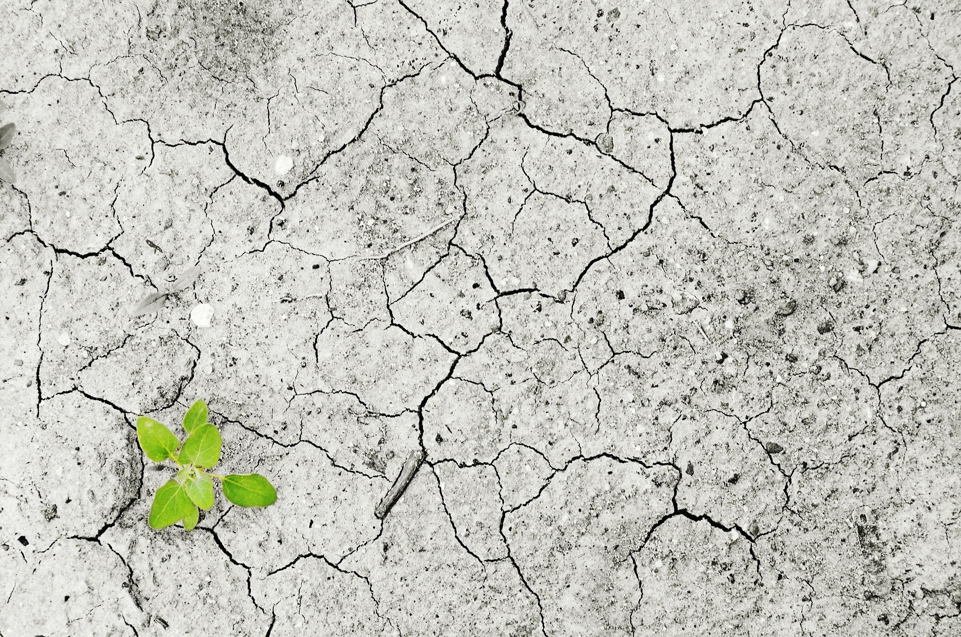 Welterschöpfungstag 2017: Risiken, Chancen und Trends