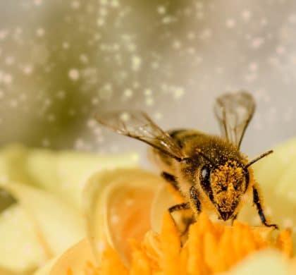 Anhaltendes Bienensterben alarmiert nicht nur Umweltschützer