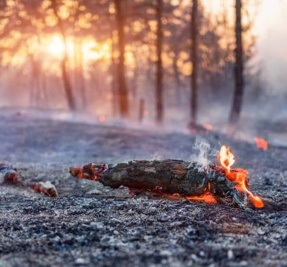 Waldbrandgefahr durch Klimaerwärmung